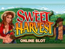 Богатый Урожай – лучший игровой автомат